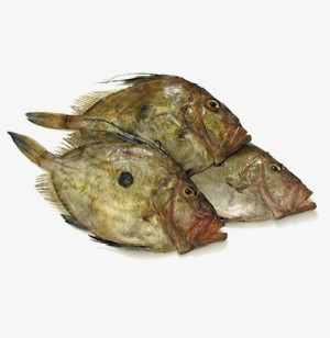 Buy john dory online m j seafood uk fresh fish specialist for Fresh fish online