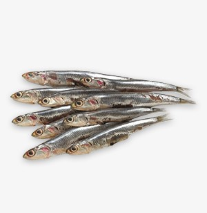 Anchovies and Sprats