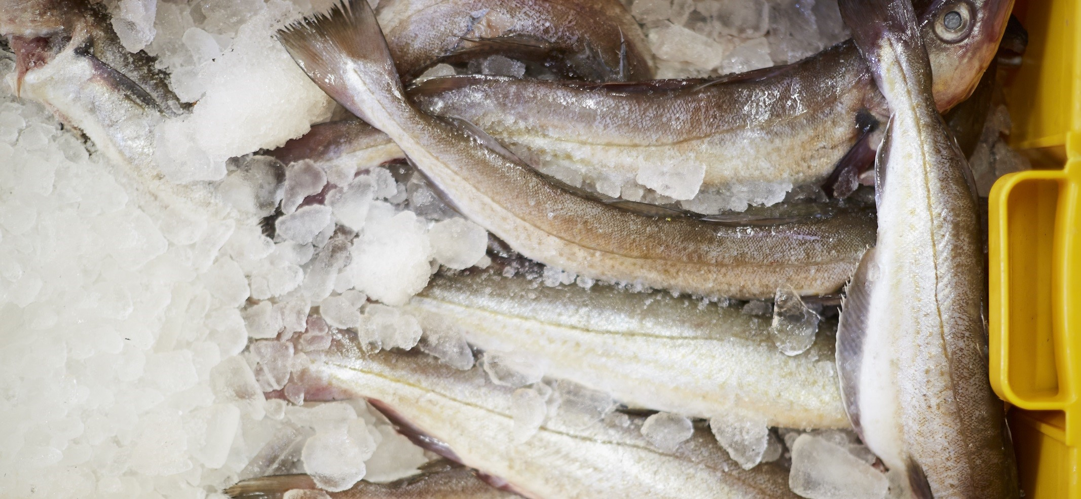 Fish & seafood outlook