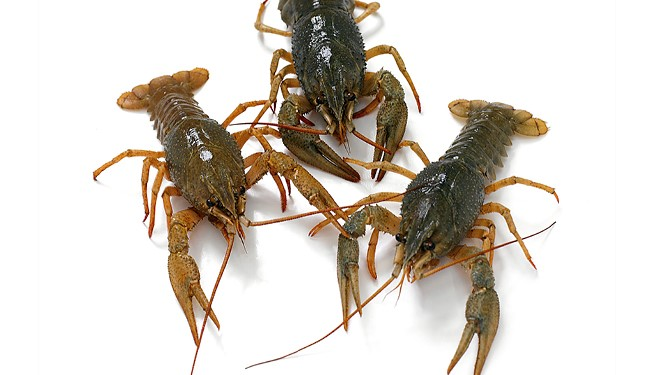 Tips for getting Crayfish on your menu