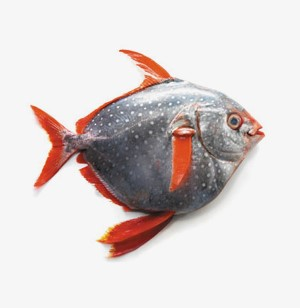 Moonfish / Opah